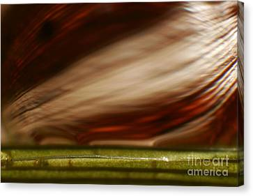 C Ribet Orbscape 1168 Canvas Print by C Ribet