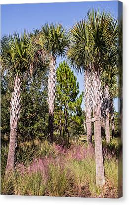 Cabbage Palm Canvas Print by Zina Stromberg