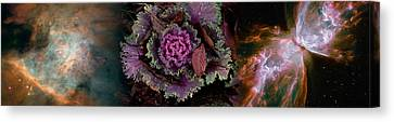 Cabbage With Butterfly Nebula Canvas Print by Panoramic Images