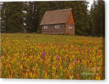 Cabin On Grand Mesa Canvas Print