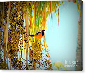 Cabo Oriole Canvas Print by Gerhardt Isringhaus
