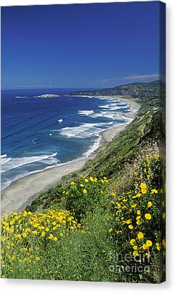 Cachagua Coastline Chile Canvas Print