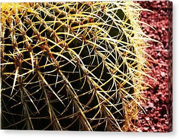 Cactus 10 Canvas Print