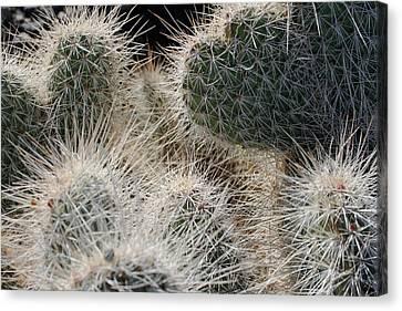 Cactus 11 Canvas Print
