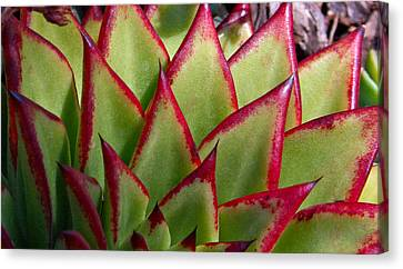 Cactus 3 Canvas Print
