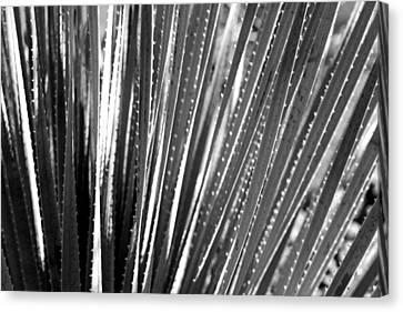 Cactus 7 Canvas Print