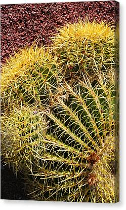 Cactus 9 Canvas Print