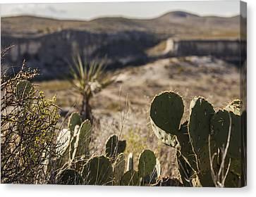 Judge Roy Bean Canvas Print - Cactus And Cliffs by Amber Kresge