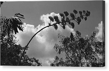 Canvas Print featuring the photograph Cactus And Cloud by Kenny Glotfelty