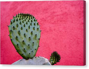 Dark Pink Canvas Print - Cactus And Pink Wall by Carol Leigh