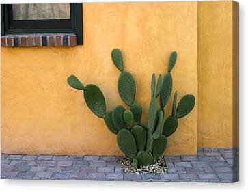 Cactus And Yellow Wall Canvas Print by Carol Leigh