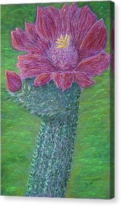 Cactus Bloom Canvas Print by Dawn Marie Black