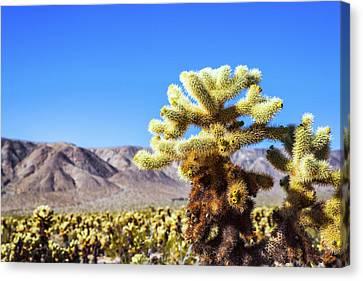 Cactus Close Up Canvas Print