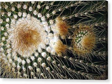 Cactus Close-up Canvas Print by Joyce  Wasser