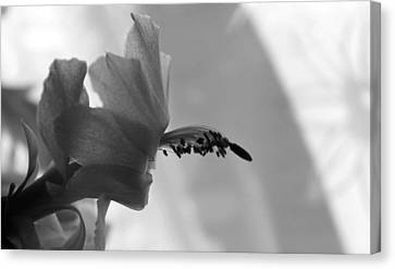 Canvas Print featuring the photograph Cactus Dance by Silke Brubaker