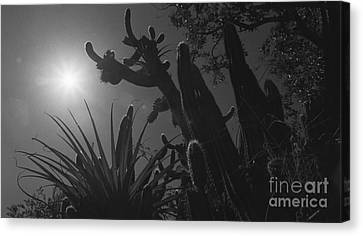 Canvas Print featuring the photograph Cactus Family - 2 by Kenny Glotfelty