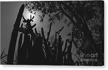 Canvas Print featuring the photograph Cactus Family by Kenny Glotfelty