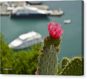 Cactus Flower Above The Port Of Nice Canvas Print by Allen Sheffield