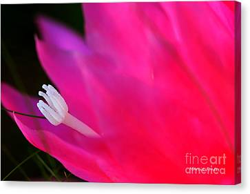 Cactus Flower Summer Bloom Canvas Print by Tap On Photo