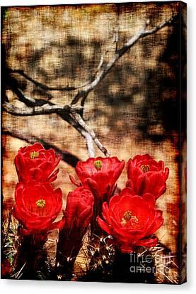 Watson Lake Canvas Print - Cactus Flowers 2 by Julie Lueders
