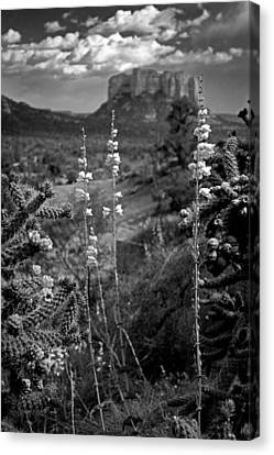 Canvas Print featuring the photograph Cactus Flowers And Courthouse Bluff Bw by Dave Garner