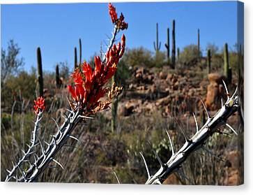 Canvas Print featuring the photograph Cactus Flowers by Diane Lent