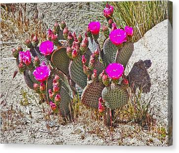 Cactus Flowers Canvas Print by Gregory Dyer