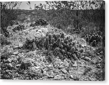 Judge Roy Bean Canvas Print - Cactus Headstones by Amber Kresge