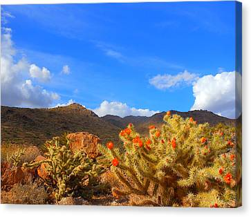 Cactus In Spring Canvas Print