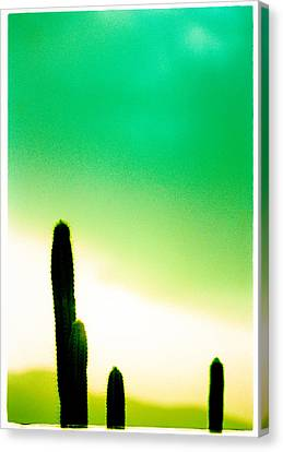 Cactus In The Morning Canvas Print by Yo Pedro