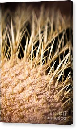 Canvas Print featuring the photograph Cactus Skin by John Wadleigh