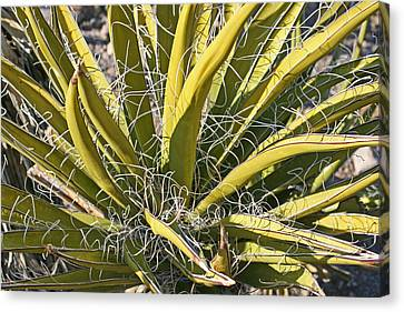 Cactus15 Canvas Print