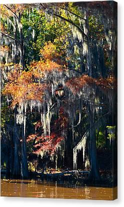 Caddo Lake 40 Canvas Print