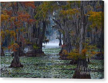 Caddo Lake Morning Canvas Print by Snow White