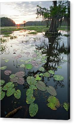 Caddo Lake, Texas's Largest Natural Canvas Print
