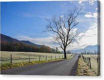 Tree On A Frosty Morn Canvas Print