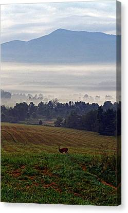 Cades Cove - Misty Morning Canvas Print by George Bostian