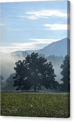 Cades Cove Tree  Canvas Print