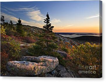 Cadillac Mountain Sunrise - D003670 Canvas Print by Daniel Dempster