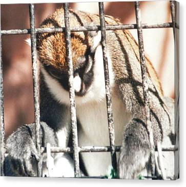 Caged But Strong Canvas Print by Belinda Lee