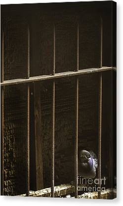 Caged Canvas Print by Margie Hurwich