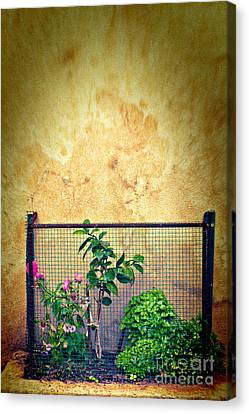 Caged Canvas Print by Silvia Ganora