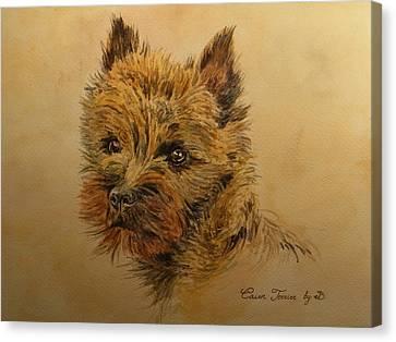 Cairn Terrier Dog Canvas Print by Juan  Bosco