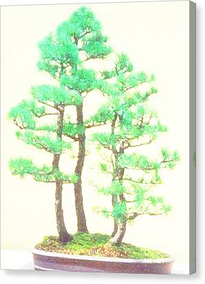 Caitlin Elm Bonsai Tree Canvas Print by Marian Cates