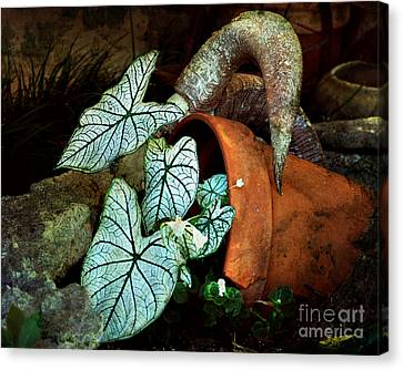 Caladiums In Broken Pot Canvas Print
