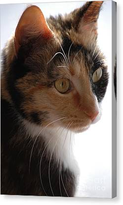Canvas Print featuring the photograph Cali by Christiane Hellner-OBrien
