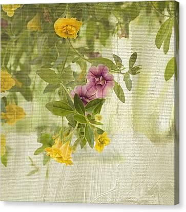 Calibrachoa In Morning Light Canvas Print