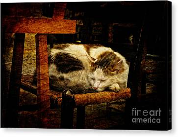 Calico Canvas Print by Lois Bryan