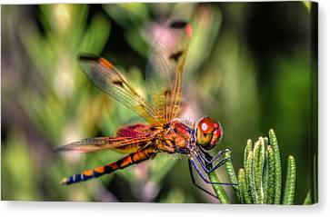 Calico Pennant Canvas Print by Rob Sellers