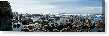 California Beach 1 Canvas Print